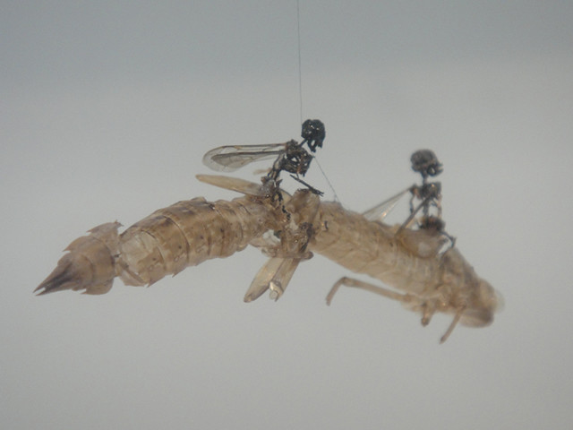 Tessa Farmer - Swarm, 2004 Exhibited at the Saatchi gallery, London as part of the NEWSPEAK: BRITISH ART NOW part 2 exhibition in 2010