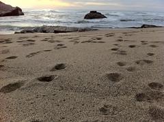 Sand (tienlehoherd) Tags: 39mm apple iso80 ƒ28 sand sfba footprints ca california norcal northerncalifornia sfbayarea sanfranciscobayarea northamerica usa iphone iphone4 datetaken:month=10 datetaken:year=2010 datetaken:day=30 saturday datetaken:date=20101030 datetaken:calendarday=1030