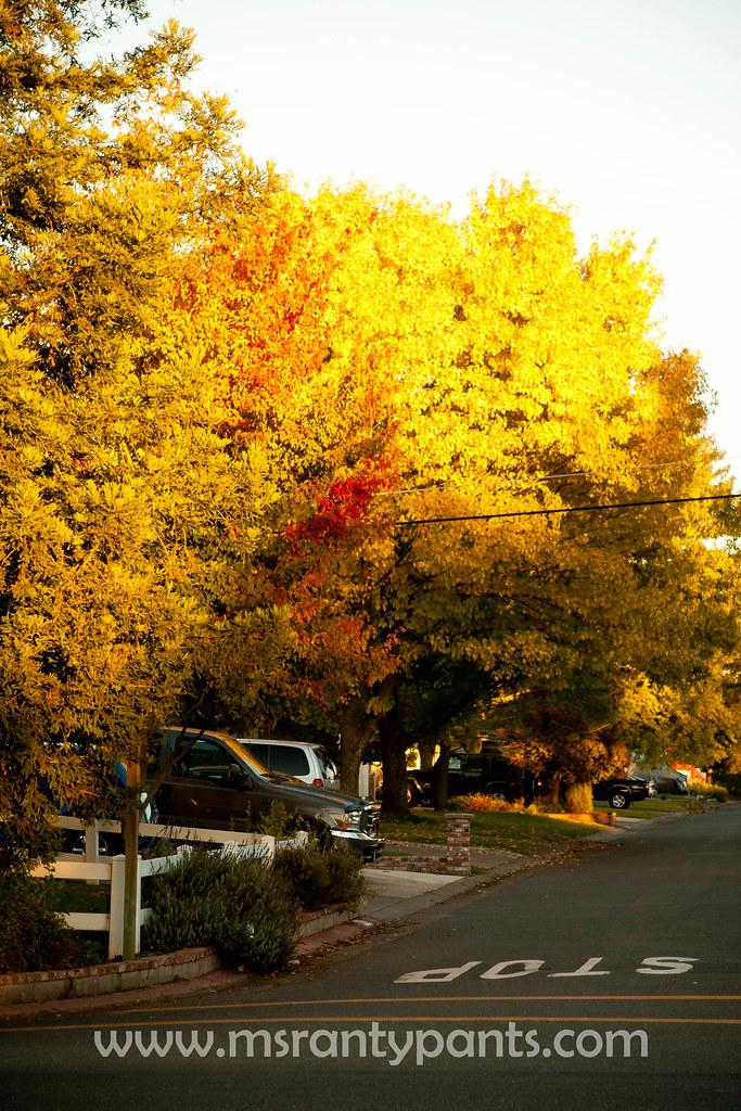 Fall Color 2010-16.jpg