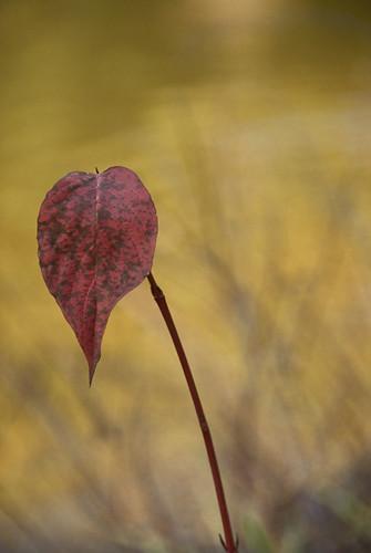 one leaf 2
