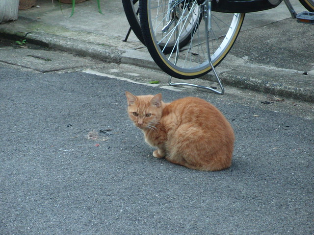 Today's Cat@2010-11-04