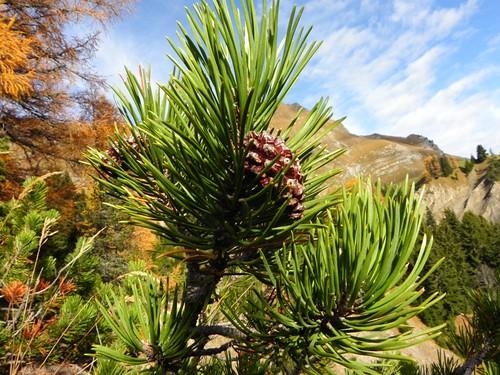 4 Pin à crochets Route des montagnes Ugine