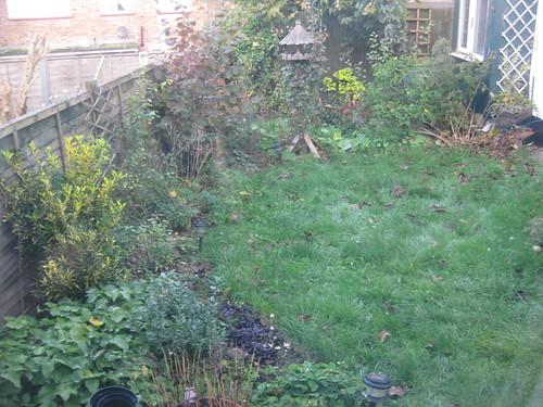 Lower lawn 1/11/2010