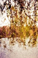 movement 309/ 365 (lolaluvsme) Tags: childhood movement wind romance romantic oldworld gallop willowtree