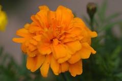 20170702_Jardins_Secrets_Vaulx_Fl (3 sur 20) (calace74) Tags: rhonealpes fleur france insectes jardin jardinssecrets macro vaulx