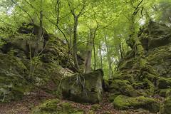 where the elves dancing (Henry der Mops) Tags: mg0463 teufelsschlucht eifel wald forest woods natur nature mplez henrydermops canoneos6d canonlens24105mm felsen rocks