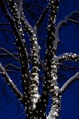 Aim High, Shoot Low (Joaaso) Tags: city winter decorations light snow tree oslo norway by night lights norge vinter twilight advent catchycolours christmaslights bluehour desember tre winterwonderland sn julelys bltime dekorasjon canonef85mmf18usm finvr canoneos450d adobelightroom2 lightroom3beta