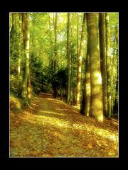 A walk in the park... (Thomaniac) Tags: park autumn trees light forest effects evening licht mood path atmosphere processing mysterious dreamy leafs magical wald bltter bume stimmung weg postwork nachmittag vertrumt geheimnisvoll magisch atmosphrisch thomaniac panasoniclumixdmcfs62