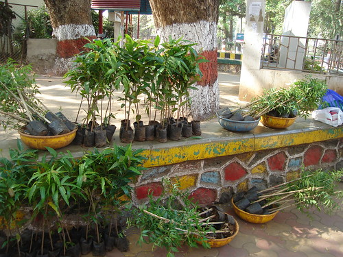 Saplings Loaded & Ready to Share