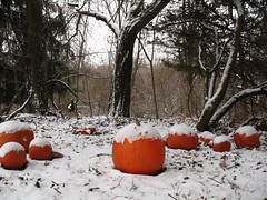 Snow Pumpkins