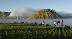0151 Starting a new day-Mt. Bromo National Park  , Indonesia (ngchongkin) Tags: beautiful indonesia bravo fourseasons showroom farmer 1001nights fhm soe aasia nationalgeographic musictomyeyes activevolcano mtbromo thegoldengallery kartpostal friendshipaward anythingyoulike platinumphoto peaceawar