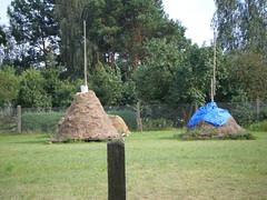 09 08 02 0011 Hayricks, Spreewald, Germany (EuCAN Community Interest Company) Tags: poland 2009 eucan milicz baryczvalley