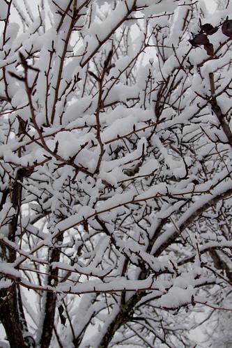 Christmas 2009-2