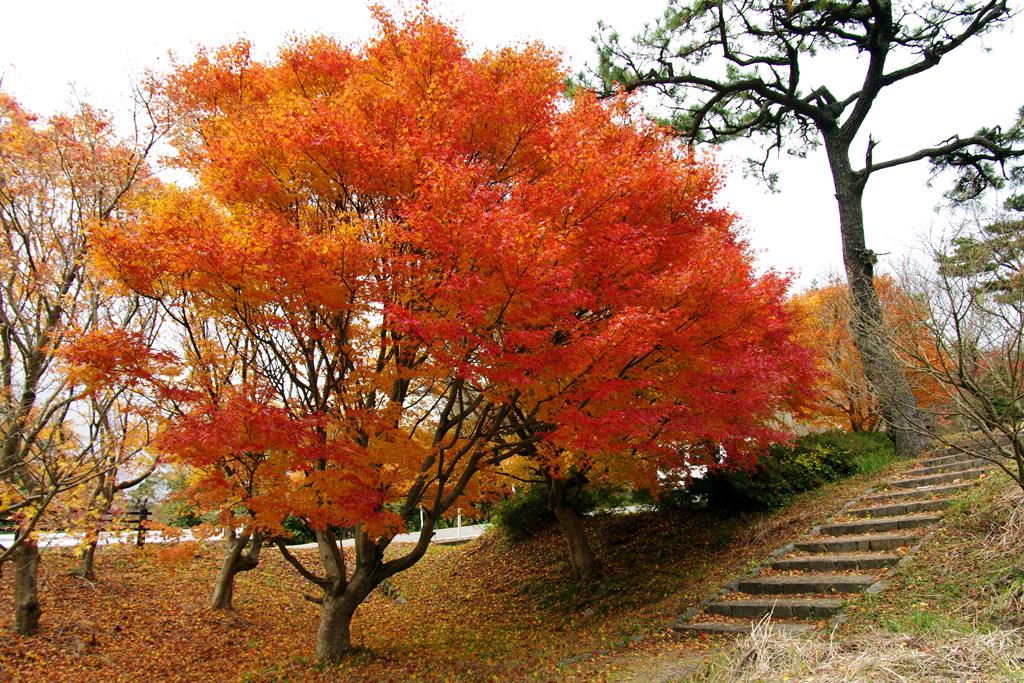 2009 日本四國紅葉之旅