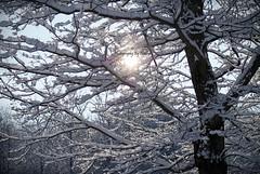 Snow Sun (nmlphotography) Tags: christmas winter light sun white snow black tree bright sparkle sparkly 2009 nmlphotography