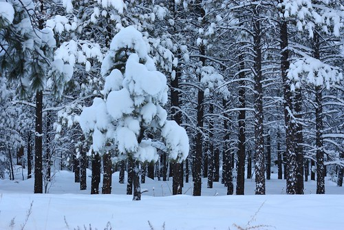 Snow 23Dec09