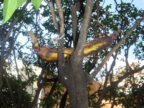 AMARRAN BANANO CON CABLE