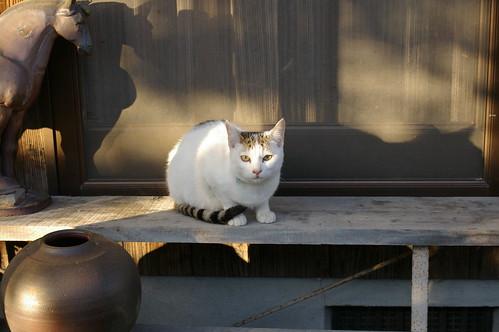 Today's Cat@20091231