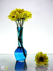 (Nasser Saleh || Photography) Tags: blue flower rose yellow canon spill nasser  saleh