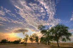 Kuwait Sunset (Eng.Nayef Alsolihem) Tags: blue sunset sea sky sun hot tree nature clouds contrast landscape nikon desert cloudy palace kuwait   nayef   flickrsbest nssq8