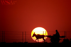 Returning-Home (ZaIGHaM-IslaM) Tags: pakistan sunset sun home rural canon big donkey cart punjab darkside returning sdk sadiqabad ryk sadikabad zagham