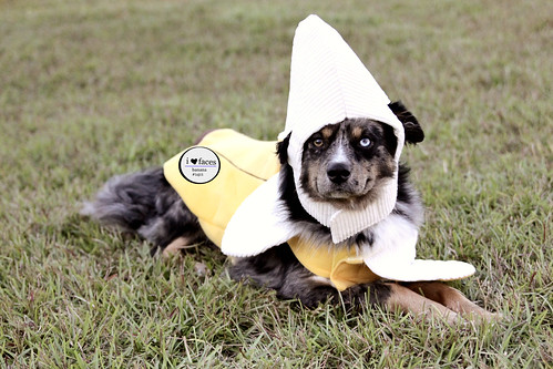 Banana Jake