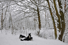 January (Greg.w2) Tags: uk trees winter england mist snow woodland nikon border charlie covered longdendale collies 0910 tass d90 broadbottom
