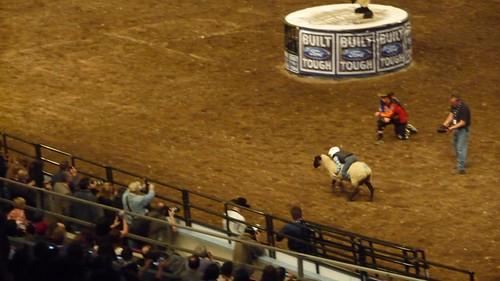 Future bullriders