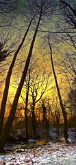 Convergence (g crawford) Tags: wood trees winter sunset panorama snow cold tree forest river scotland clyde stream frost scottish panoramas sunsets glen burn burns rivers streams hdr crawford scots ayrshire seamill copse westkilbride kirktonhall kirktonhallglen