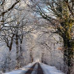white with frost......... (atsjebosma) Tags: road trees sunlight snow nature frozen frost bevroren thenetherlands wintertime landschap nietap bej whitewithfrost theunforgettablepictures january2010 atsjebosma bomenmetrijp