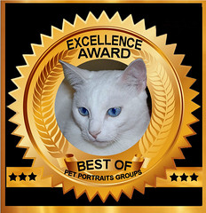 BEST OF Excellence Award