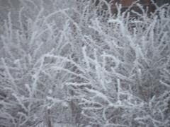 Jack Frost Works His Magic (dellajane-alicecruz) Tags: frost omaha 2010 jackfrost