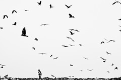 End of war [..Dhaka, Bangladesh..] (Catch the dream) Tags: boy field birds trash garbage walk horizon flight dump lonely dhaka waste solitary bangladesh landfill vastness vast wastemanagement aminbazar gettyimagesbangladeshq2