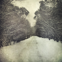 * (my-little-world) Tags: trees winter texture nature vintage landscape countryside artwork scenery country poland monochromatic layer dreamy visualpoetry poznań bsquare artisticexpression poznañ greaterpoland dreamnature flypapertextures anajotex dreamyrhymnes