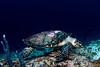 My Sweet Turtle (Lea's UW Photography) Tags: underwater turtle maldives fins schildkröte malediven tokina1017mm unterwasserfoto leamoser