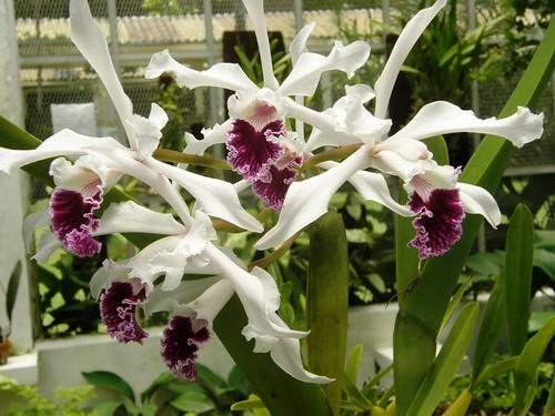 orquidea 8