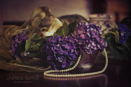 still life hydrangeas - textured