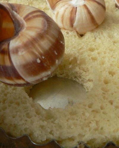 Snail plate detail