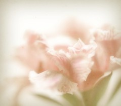 Whispering Ruffles (luvpublishing) Tags: pink flowers texture nature floral branch pastel overlay pale frontpage picnik layered ruffled explored floralessence