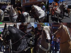 Collage de caballos (roblestjorge) Tags:
