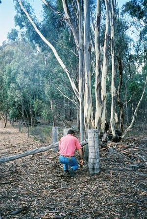 back corner in south east, showing trees from state forest