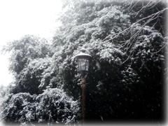 Snowing Rome (Colombaie) Tags: italien winter italy snow rome roma weather alberi liberty flora italia platano neve snowing sanlorenzo pino piante inverno tempo freddo italie lazio lampione nevicata atmosferico  italya  quercia regione tondo   precipitazioni  12febbraio2010 parcodeicadutidel19luglio1943