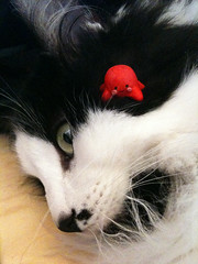 Cat and Octopus (fatseth) Tags: david macro cute cat toy fight funny chat play lol fimo squid octopus cuteness goliath versus iphone punctum pieuvre poulpe lolcat junglelaw ponctum