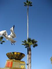 gull (chasingbluebirds) Tags: island avalon 2010 santacatalina