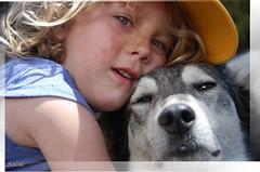 Amor incondicional- Para ti - (-Ana Lía-) Tags: portrait luz sol argentina azul nikon retrato amor adorable siberianhusky perros amistad pehuenes aprehendiz cavihaue