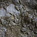 Rock365 : 14 02 2010 : Nummulitic Limestone