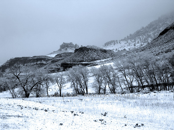 A cold winter's day in the canyon brings snow and fog to the foothills of Colorado.