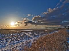 big sunny field (daryl.larkin) Tags: trees winter sky sun tree ice nature clouds sunrise frozen nikon michigan marsh absolutemichigan d5000