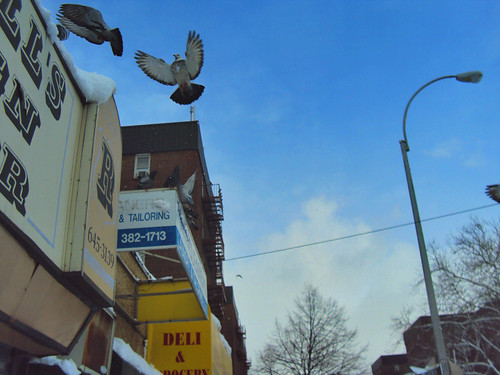 Snow Day 2 - Birds and Blue Skies?