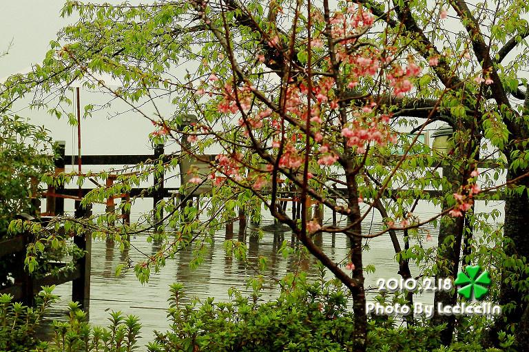 清境農場國民賓館|環境